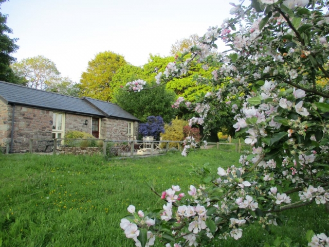 The cottage is in the orchard, here in May with apple trees in blossom